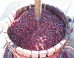 picked grapes ready to be crushed